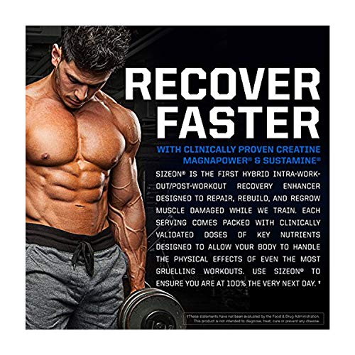 Gaspari Nutrition - SizeOn - The Ultimate Hybrid Intra-Workout Amino Acid & Creatine Formula, Increased Muscle Volume & Muscle Recovery - 3.59 Pound (Orange Cooler)